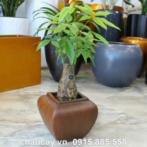 Chau Cay Canh Composit Anber Cao Cap 1026 8