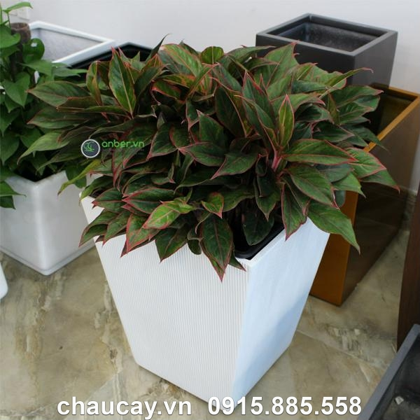 chau-composite-anber-vuong-vat-day-xoc-doc-1607 (2)