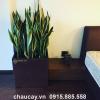 chau-composite-anber-vuong-xoc-doc-1483 (4)
