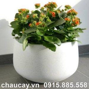 Chậu composite ipot trồng cây trụ tròn thấp | IP-00028