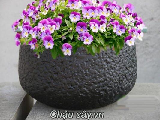 Chau Composite Ipot Vuong Vat Day Cao Cap Ip 00007 2