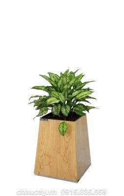 Chậu gỗ thông minh Green Archi vuông bầu đáy nhỏ | GA - 131A