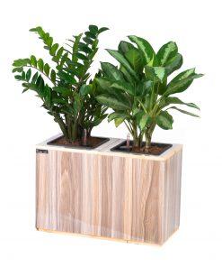 Chậu gỗ thông minh tự tưới Green Archi 2 khoang | GA - 211B