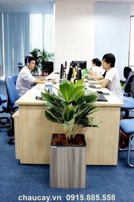 Chậu Gỗ Thông Minh Tự Tưới Green Archi Vuông Trung | Ga - 111B