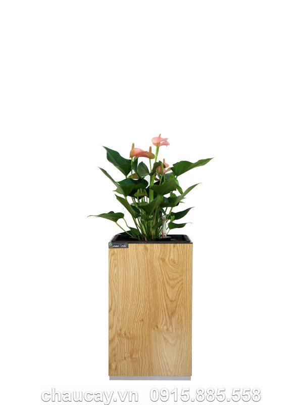chau-go-thong-minh-tu-tuoi-green-archi-vuong-nho-ga-111a (1)