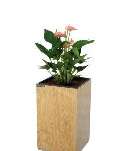 Chậu gỗ thông minh tự tưới Green Archi vuông nhỏ | GA - 111A