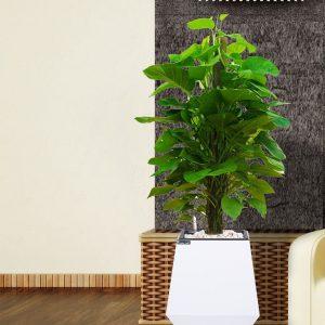 Chậu gỗ tự tưới Green Archi vuông bầu đáy trung | GA - 133B