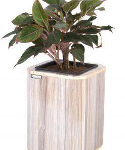 Chậu gỗ tự tưới Green Archi vuông vát góc trung | GA - 513B