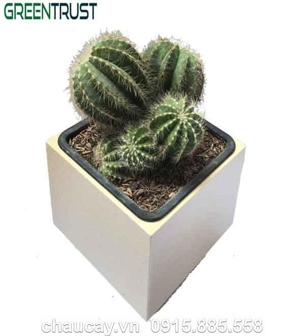 Chậu Green Archi để bàn vuông bầu đáy | GAB-133A