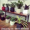chau-green-archi-de-ban-vuong-bau-day-gab-133a (7)