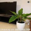 chau-hoa-composite-anber-tron-cao-cap-1151 (3)
