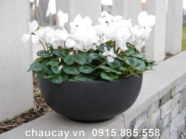 Chậu hoa composite ipot tròn sang trọng | IP-00009Chậu hoa composite ipot tròn sang trọng | IP-00009