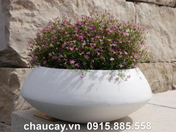 chau-hoa-composite-ipot-tron-tinh-te-ip-00023 (1)