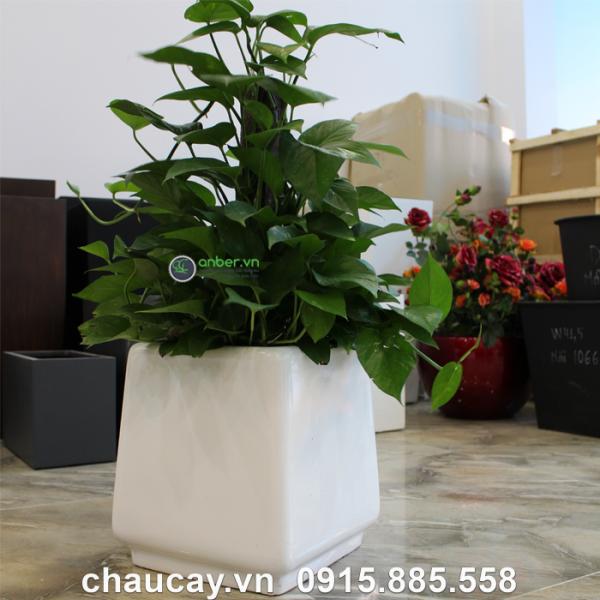 chau-nhua-composite-anber-sang-trong-1010 (2)