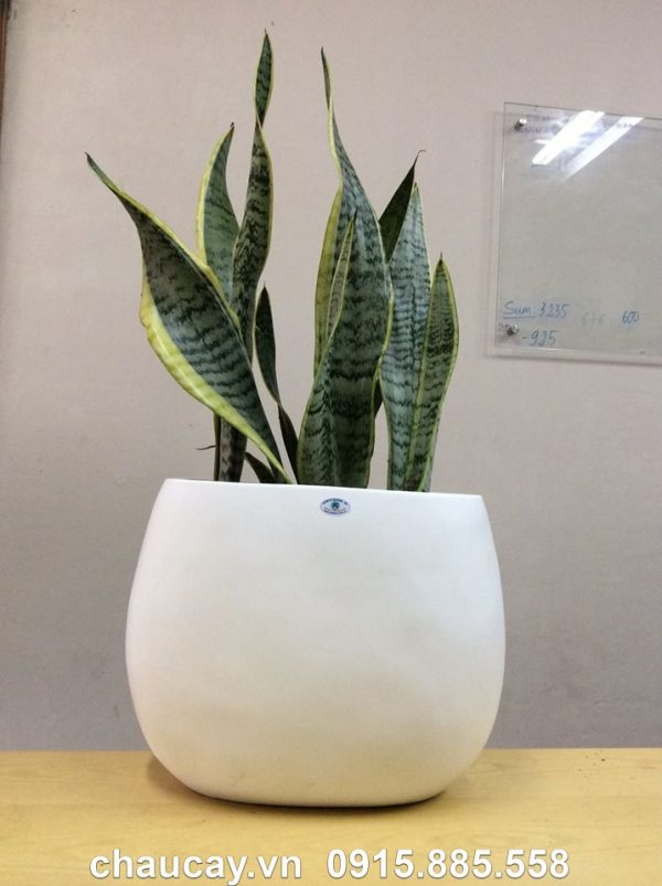 chau-nhua-composite-ipot-hinh-oval-ip-00010 (2)
