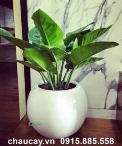 Chậu nhựa trồng cây composite anber tròn 1091