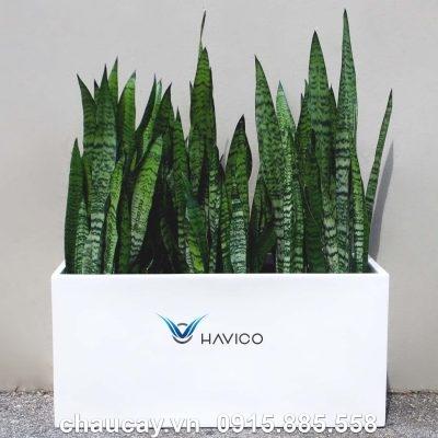 Chậu nhựa composite Havico Visio chữ nhật dài  C319