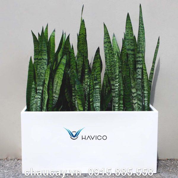 chau_composite_havico_visio_hinh_chu_nhat_c_319 (2)