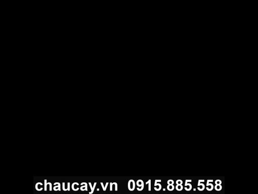 Chậu Cây Composite Tròn Sang Trọng - 11305