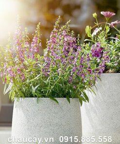 Bình hoa composite Esteras Almelo trồng cây cảnh