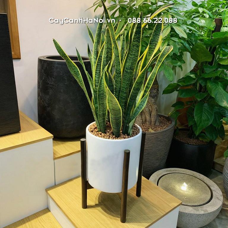 Chậu Hoa Composite Xu Hướng Được Ưa Chuộng Nhất Hiện Nay